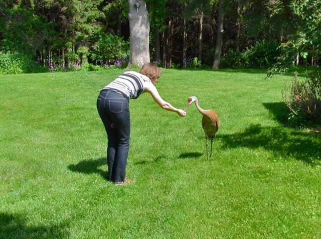 Jen feeding the crane.